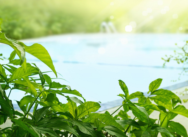 Tropical plants by pool, swimming pools brevard county